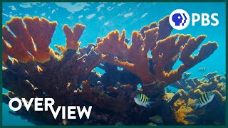 How to Stop Your Poop from Killing Corals | Overview