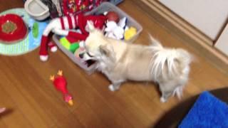 最近、ウチのソラは、遊んだおもちゃを自分で片付けるようになりました。