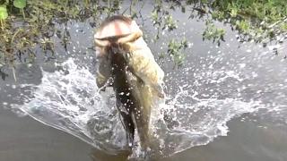 BIG Bass Can Jump!