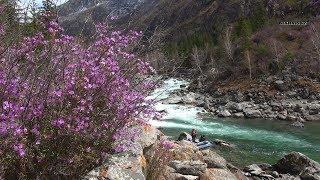 Рыбалка в глухой тайге/Труднодоступная река Кадрин #1/Экстрим на Алтае.