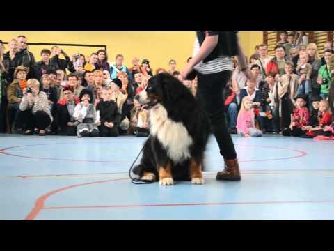 Pokaz tresury psów