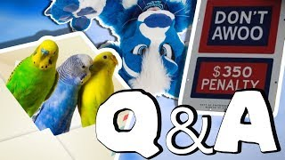 Furry hate, binning suits, & MAIL LIVE BUDGIES?! [Q&A #20]