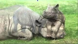 Aiden: Rhino Thumbnail