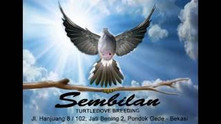 Sembilan Bird Farm / Turtledove Breeding