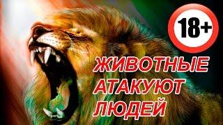 ШОК! Животные атакуют людей. Animal Attacks on Humans