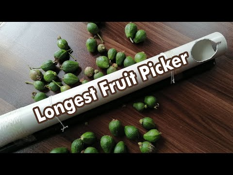 Fruit Picker 106 DIY 100 ways to do 1 jobKaynak: YouTube · Süre: 2 dakika42 saniye