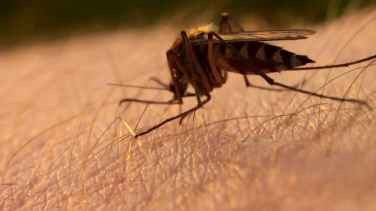 укусы комара фото