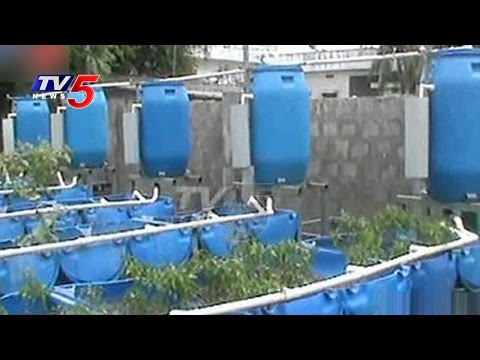 Soil-Less Farming | Aquaponic Gardening - Growing Fish and Vegetables Together | Annapurna |TV5 News