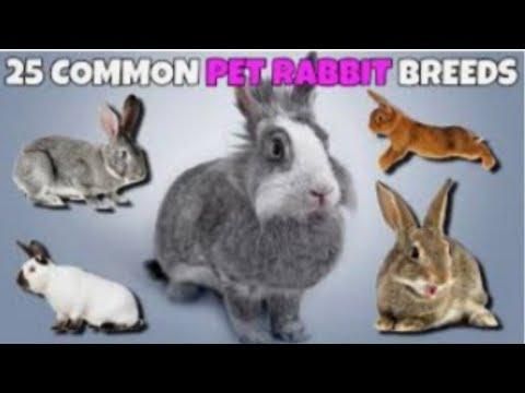 25 Common Pet Rabbit Breeds