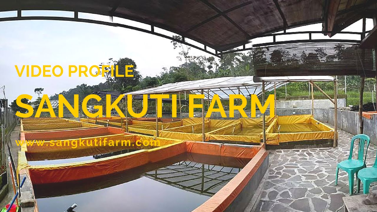 Download SANGKUTI FARM VIDEO PROFILE (Budidaya Lele Sangkuriang)