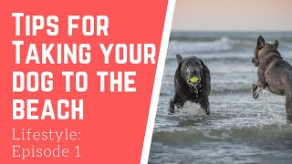 Tips on taking your dog to the beach