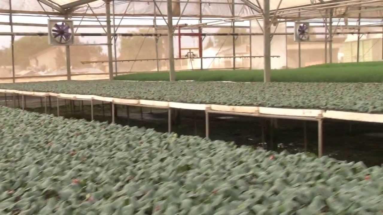 native plant nursery business plan