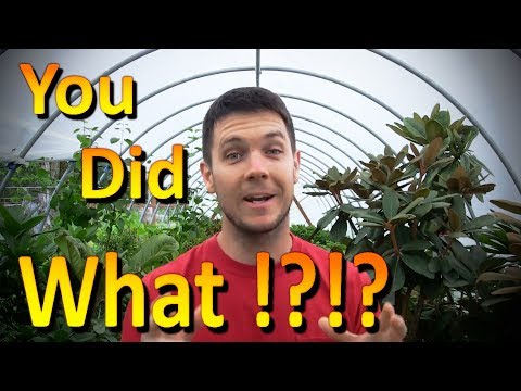 The Best Organic Fertilizer for Plants (Part 1) | It's Free and Urine is Full of Nutrients!