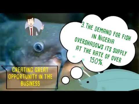Catfish Business in Nigeria