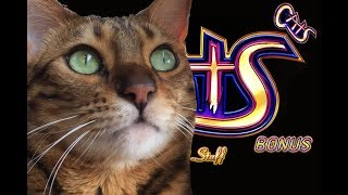 CATS SLOT PLAY - Some HUGE Jackpots