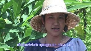 """Rencontre avec la co-directrice du centre de recherche """"Ecoland"""" de Phnom Penh"""