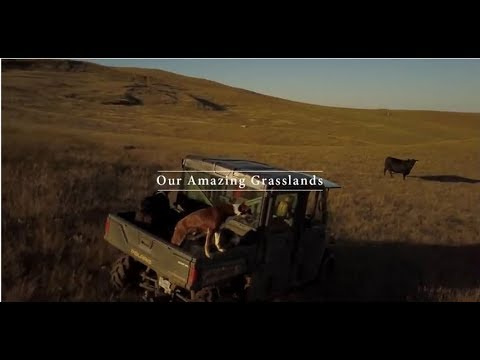 Our Amazing Grasslands ~ healthy agricultural lands are important for wildlife