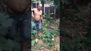 Man Barely Escapes Tegu Lizard Attack - 1016713