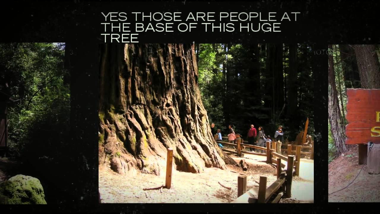 Tent Cabins Big Basin Redwoods Park  Reservations 800.444.7275 & Tent Cabins Big Basin Redwoods Park : Reservations 800.444.7275 ...