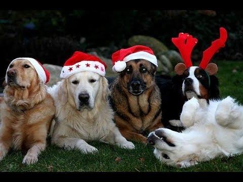 Bildergebnis für schöne adventszeit gewünscht bilder