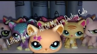 Littlest Pet Shop: All Of My Lps Destiny Cats