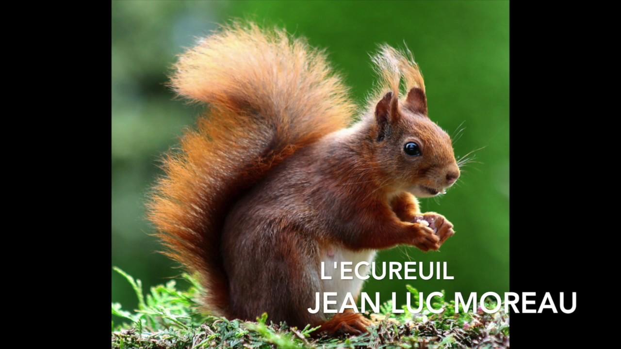 Poésie Lécureuil Jean Luc Moreau