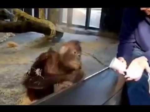 орангутанг фото ржака