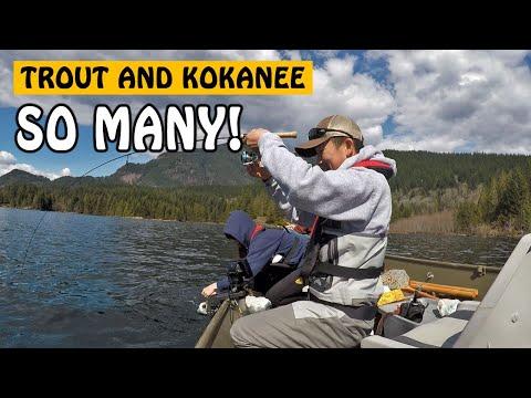 SO MANY HOOK-UPS! Kokanee And Rainbow Trout At Hicks Lake Harrison Hot Springs BC | Fishing With Rod