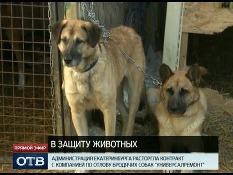 Отловом бродячих собак в Екатеринбурге займется новая фирма