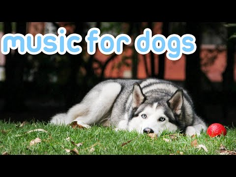 Music for Dogs! Help Relax your Puppies with this Amazing Soothing Music!