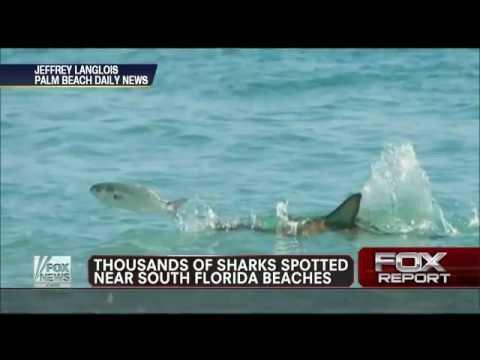 South Florida Beaches Close As Sharks Swarm Offshore