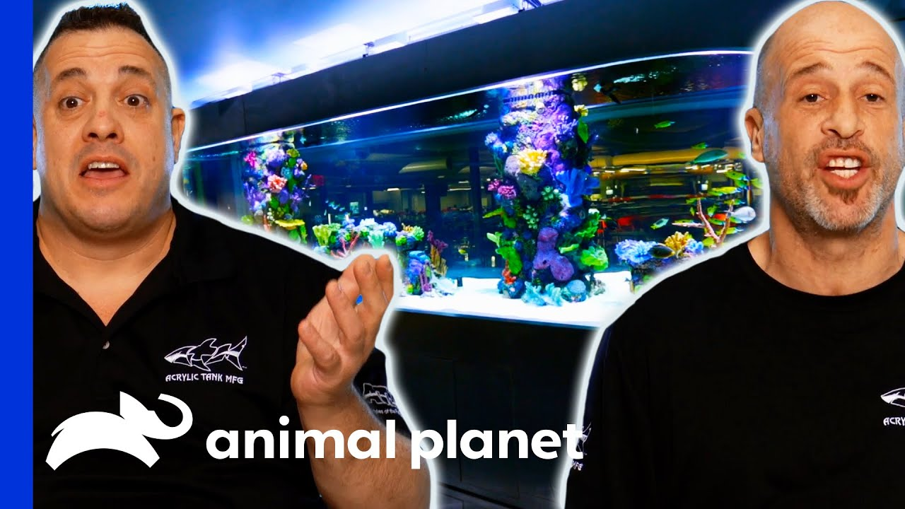 Download Brett And Wayde Build The Biggest Shark Tank Of Their Careers   Tanked