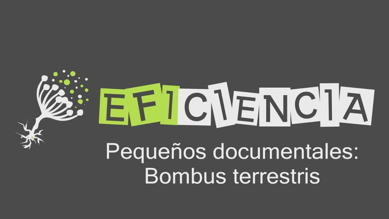 PEQUEÑOS DOCUMENTALES: ABEJORRO COMÚN. Bombus terrestris ...