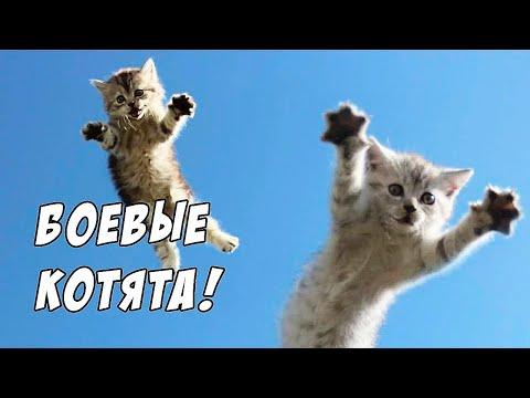 котята лис игра и