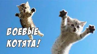 Котята Атакуют! - Strikeforce Kitty