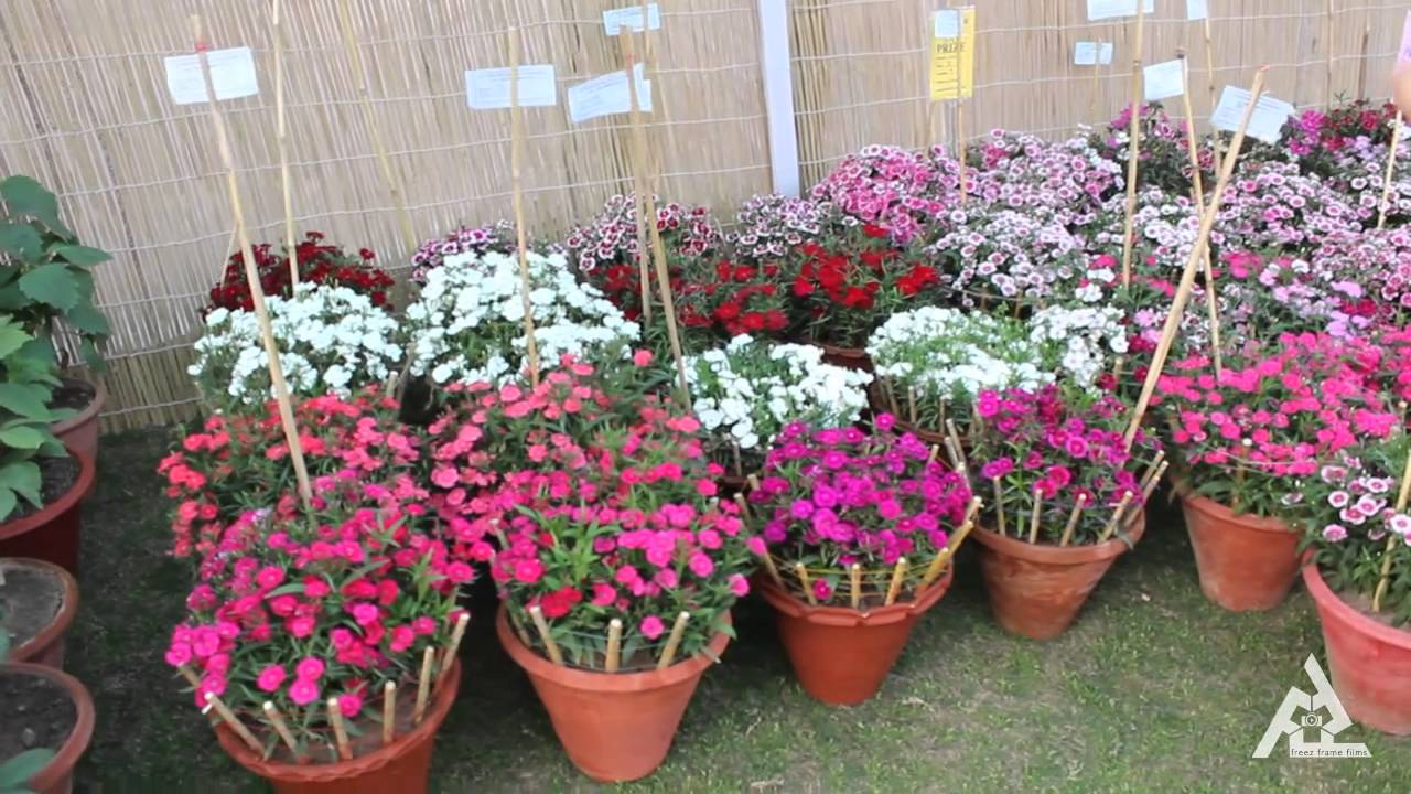 ROSE FESTIVAL | FLOWERS EXHIBITION | ZAKIR ROSE GARDEN CITY BEAUTIFUL  CHANDIGARH | PART   4