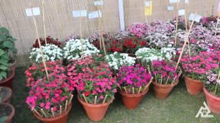 ROSE FESTIVAL | FLOWERS EXHIBITION | ZAKIR ROSE GARDEN CITY BEAUTIFUL CHANDIGARH | PART - 4