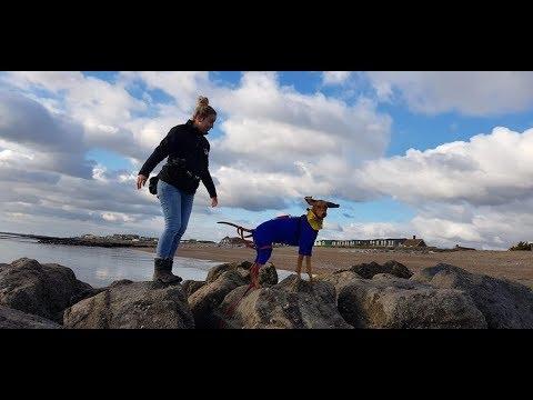 Rosie - Hungarian Vizsla - 4 Weeks Residential Dog Training