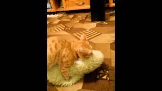 Кот любит подушку
