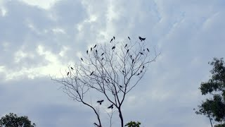 A flock of birds flying around a tree in the blue cloudy sky - freedom concept