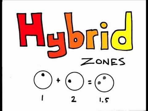 The Wonderful World of Evolution: Hybrid Zones - YouTube
