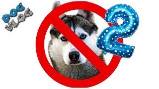 DOGVLOG: 20 ПРИЧИН ПРОТИВ ХАСКИ 2 ЧАСТЬ. Хаски Бандит. Говорящая собака