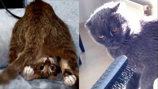 Hilarious Cat Fails  Funny Cats Compilation 2021