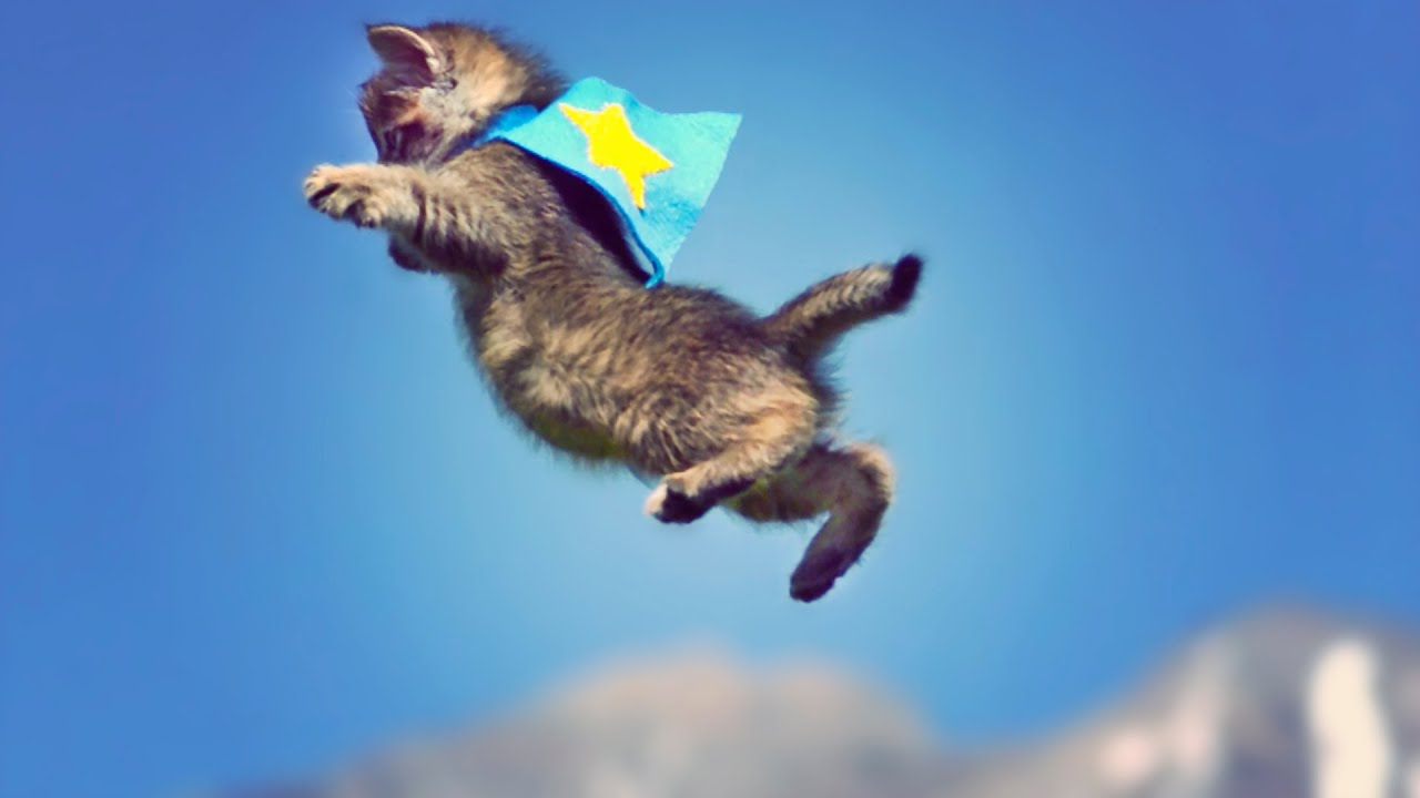 Fall Kittens Wallpaper Cute Kittens Fly In Slow Motion Scottdw Youtube