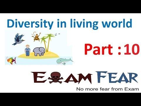 Biology Diversity in Living World part 10 (Order, class, phylum, div, kingdom) CBSE class 11 XI