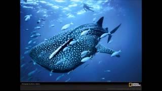 Песни Китов (Звуки природы)