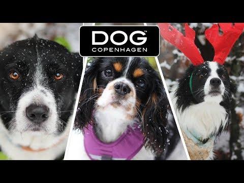 MEET US!! TESTING DOG COPENHAGEN DOGGEAR