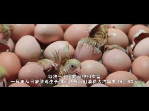 China Poultry Project