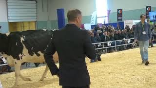 Suprême Laitier 2017 - 5 ans - Holstein