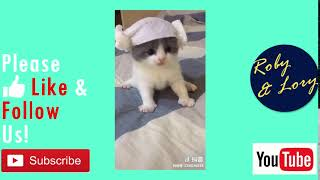 Cute Cat Kitten Baby Eating - Relax Funny Cat Video